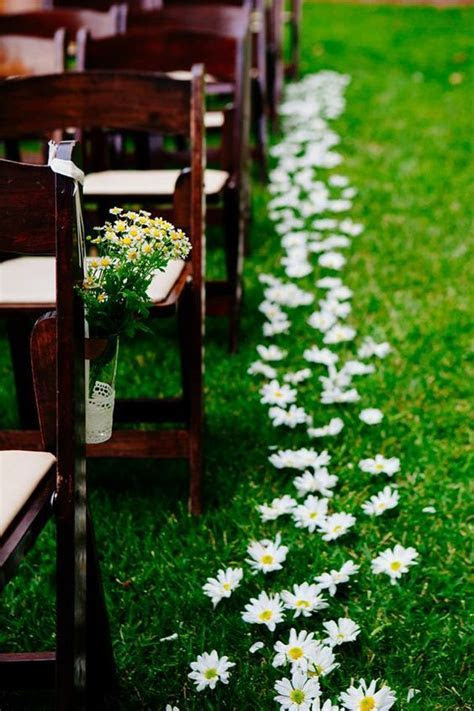 30 Ideas to Incorporate Chamomile Daisies Into Your