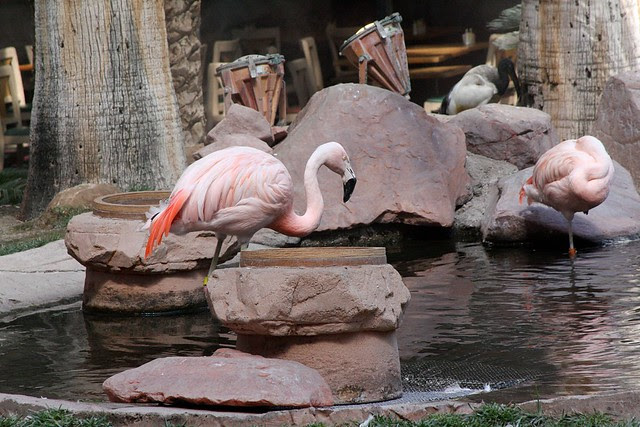 Flamingoes, Flamingo Las Vegas