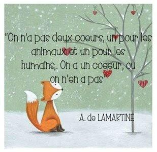 CS-02-2018-Sujet-Animaux-and-Co-de-Littlecat-