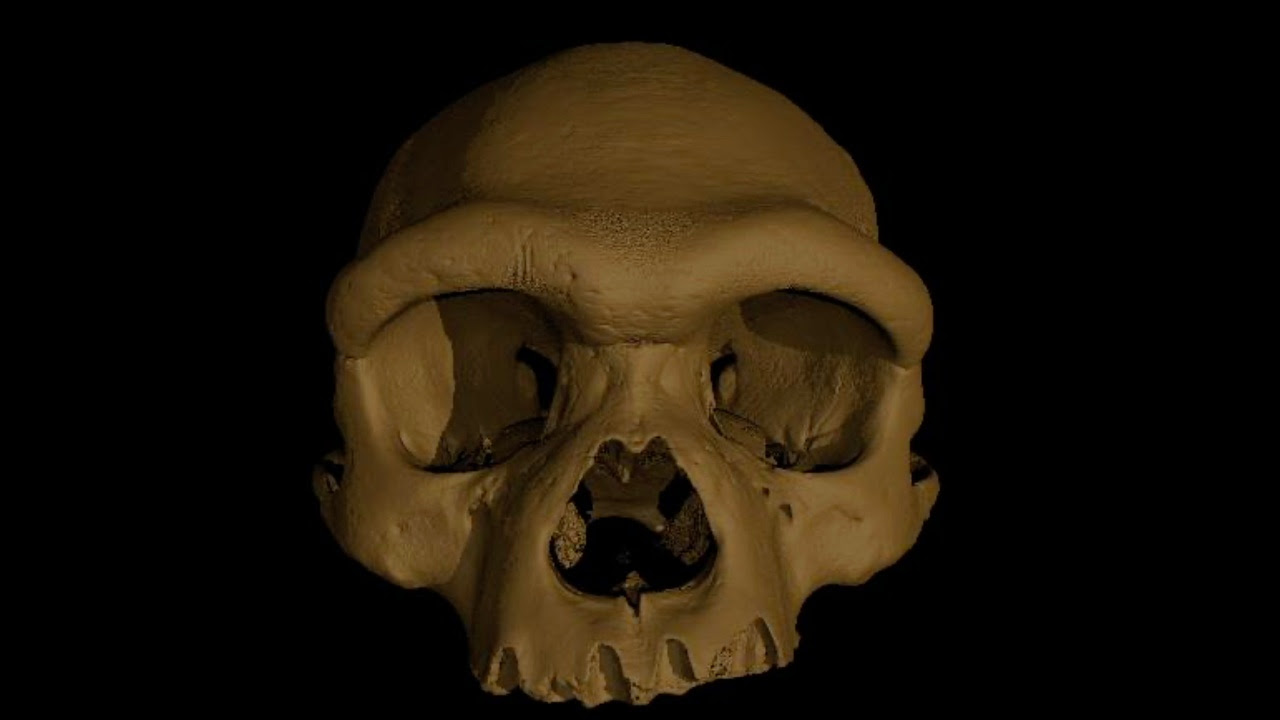 """In an undated image from Xijun Ni, a digital reconstruction of the cranium nicknamed """"Dragon Man."""" Scientists on Friday announced that the massive fossilized skull that is at least 140,000 years old is a new species of ancient human. (Xijun Ni via The New York Times) -- FOR EDITORIAL USE ONLY WITH NYT STORY DRAGON MAN FOSSIL BY CARL ZIMMER FOR JUNE 25, 2021. ALL OTHER USE PROHIBITED. --"""