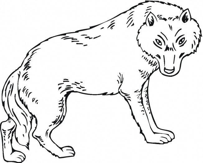 12 wolf coloring pages - Print Color Craft
