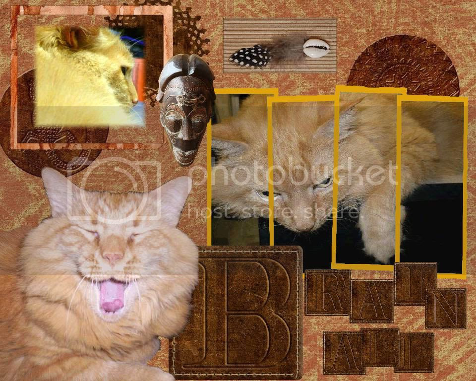 Ginger Cat,Tabby Cat,Domestic Cat
