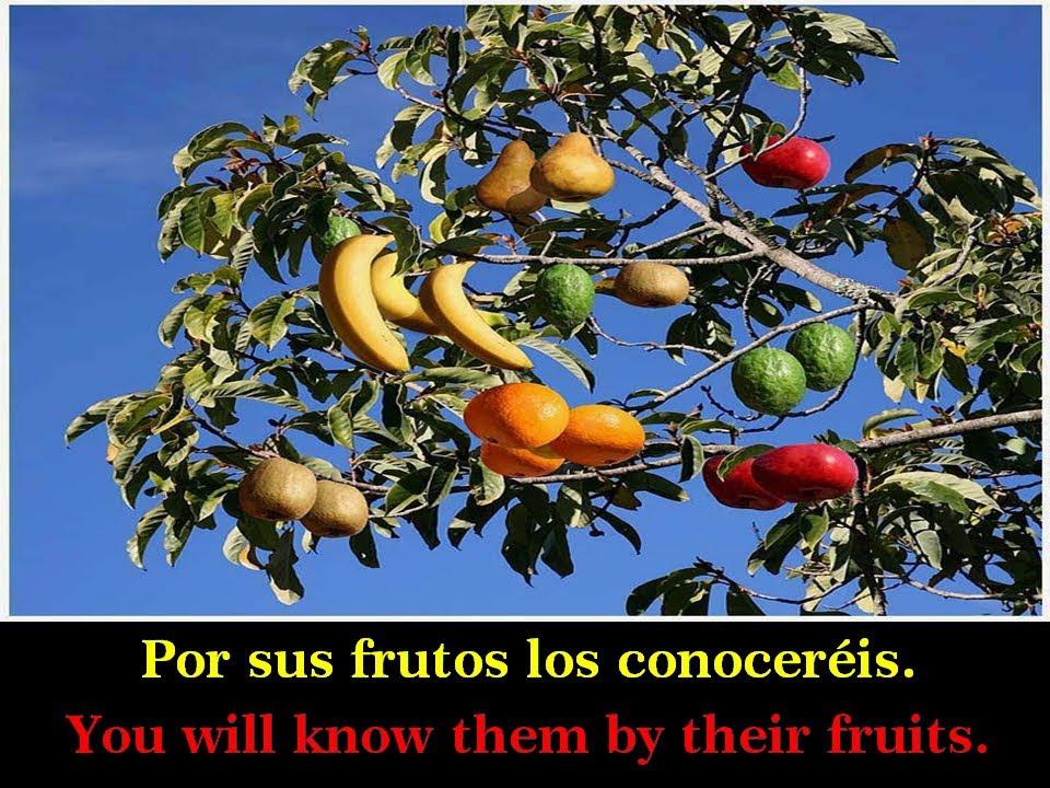 por sus frutos los reconoceran nvi
