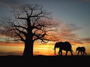 Ivory: Uses, sourcing and legalities