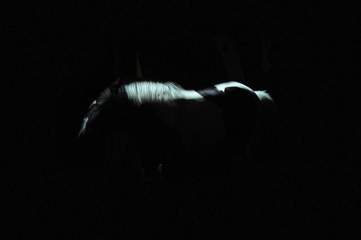 american horse_9153 web