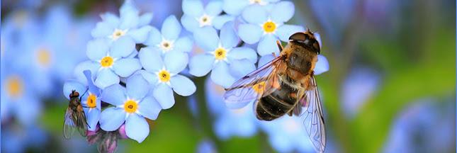 """Résultat de recherche d'images pour """"abeilles pollinisation"""""""