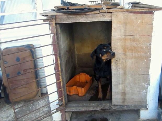 Dono de oficina é condenado por maus tratos a cachorro em Pouso Alegre (Foto: Reprodução EPTV)