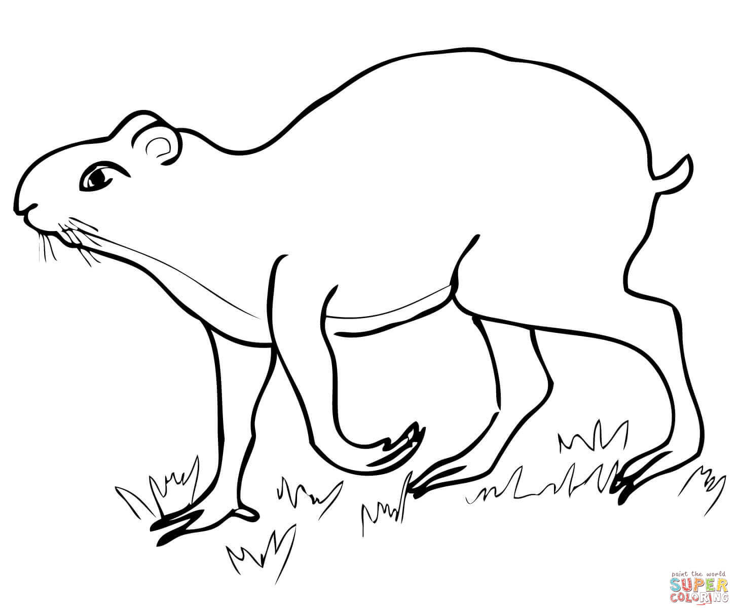 8800 Top Coloring Pages Of Amazon Rainforest Animals For Free