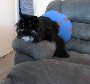 armrest-cat1