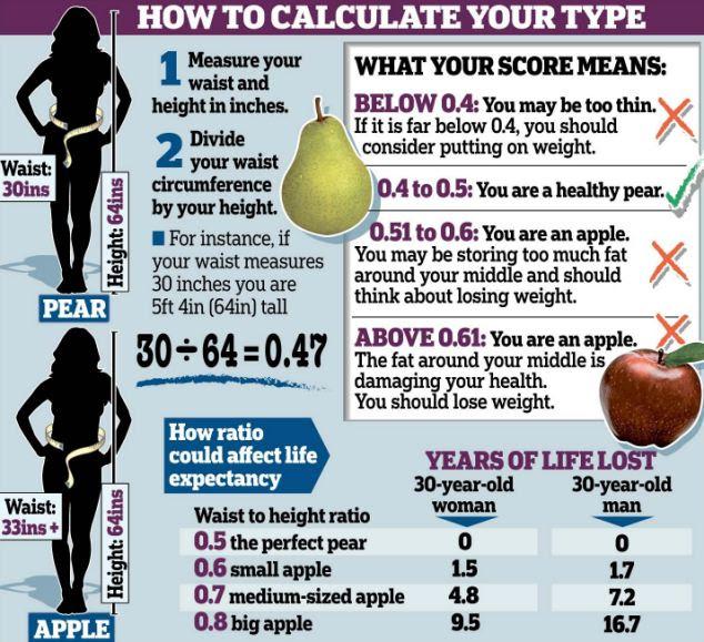 body fat percentage calculator height waist