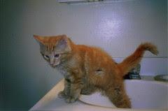 cat in a sink