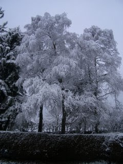 a snow covered tree