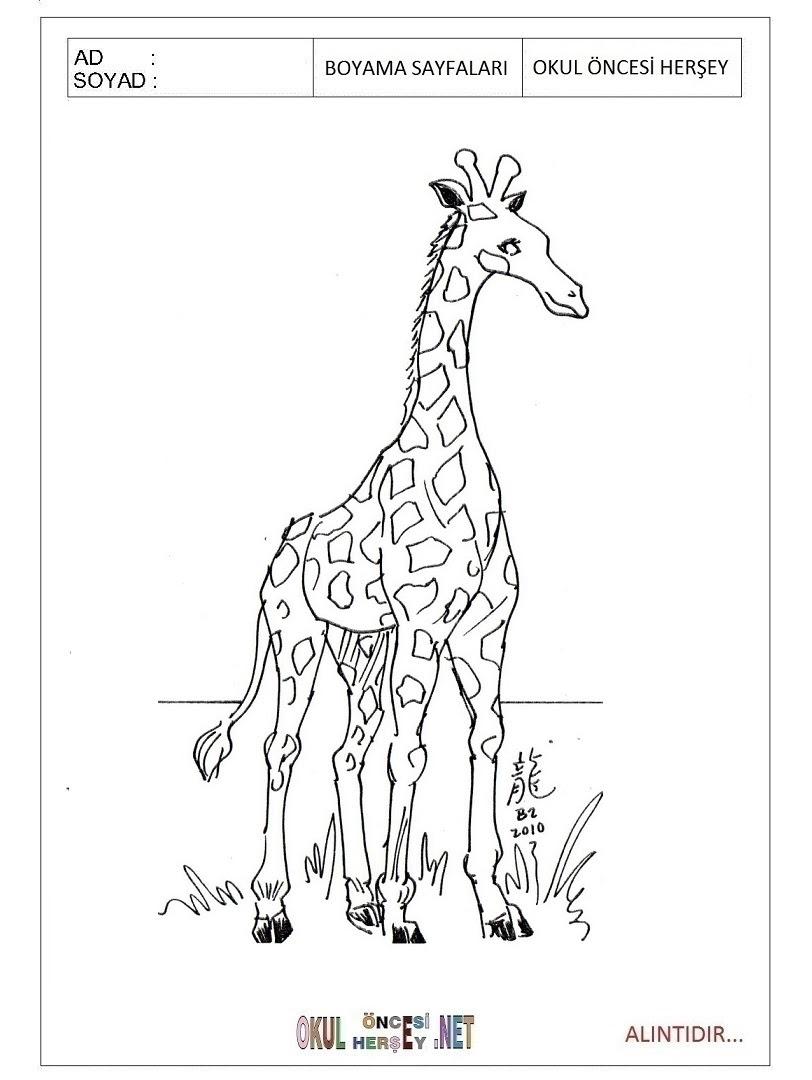 Zürafa Boyama Sayfaları