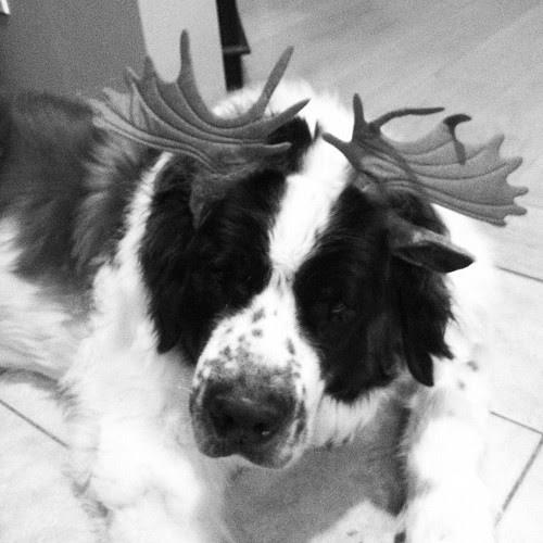 Moose Bernard