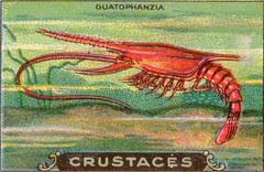 crustacés 2