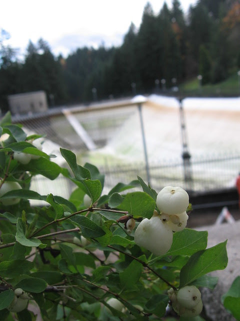 reservoir3_berries