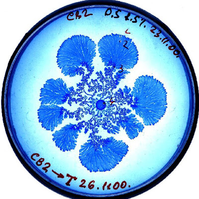 vie petri bacterie jardin 06 De la vie dans le petri  technologie art
