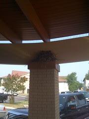 Bird nesting atop spikes