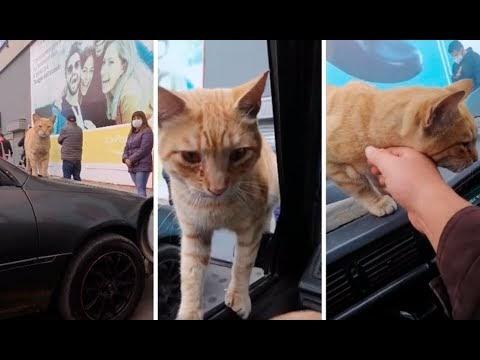 Joven llama a gato callejero para acariciarlo y termina adoptandolo.