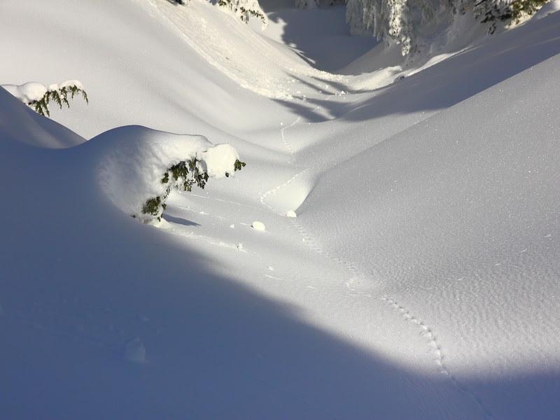 IMG_0513 Ranger-Led Snowshoe Walk