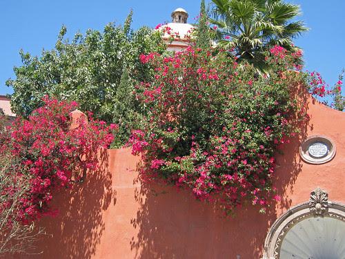 mur fleuri