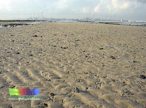 Living sandy shores of Cyrene off Pulau Bukom