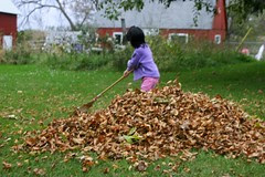 Olivia Raking Leaves