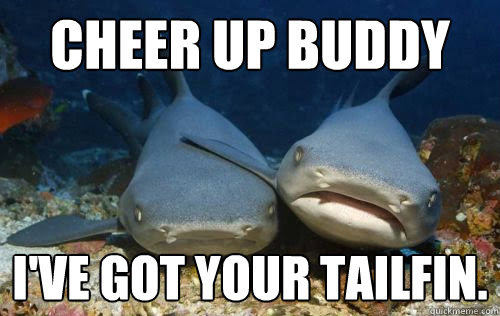 Cheer Up Buddy Ive Got Your Tailfin Compassionate Shark Friend