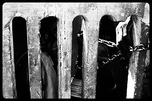 Possessed Women In Chain At Hussain Tekri Jaorah by firoze shakir photographerno1