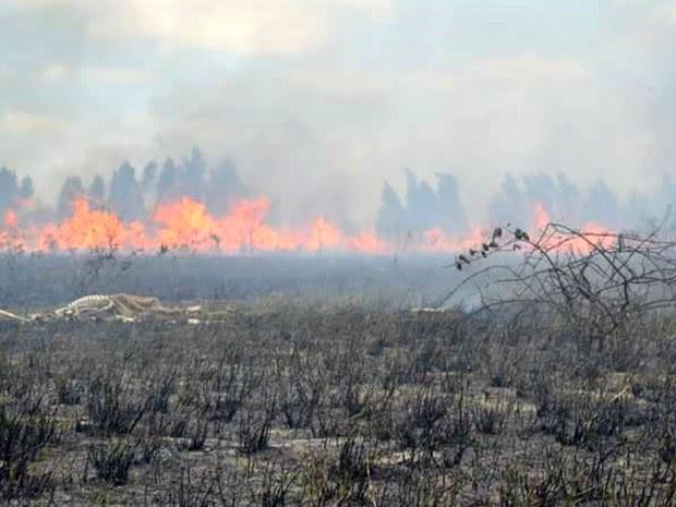 Incêndio atinge área de proteção ambiental no RN desde a sexta (7) (Foto: Rose Dantas/G1)