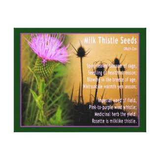 Milk Thistle Seeds Canvas Print