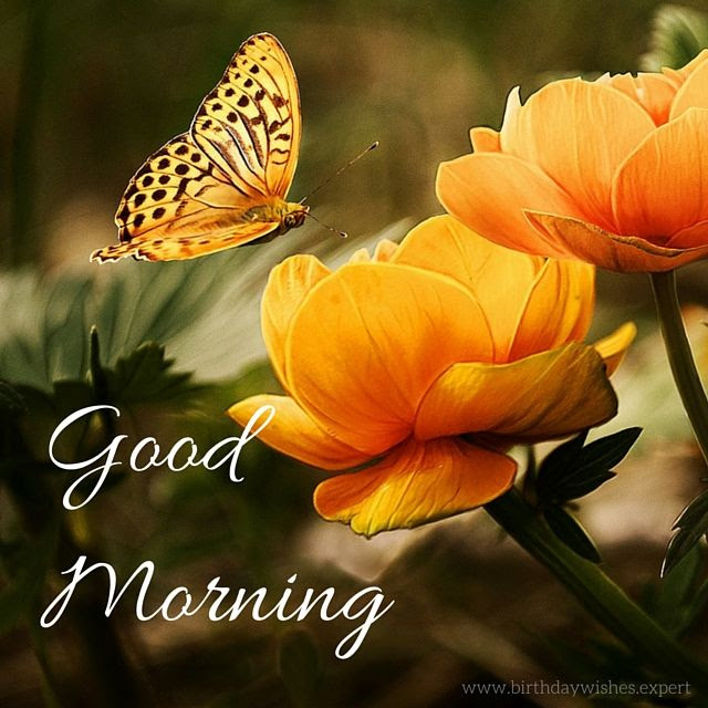 Good Morning Quote With Flowers And Butterflies Pictures Photos
