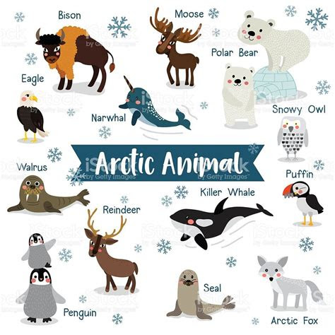 arctic animal cartoon  white background  animal