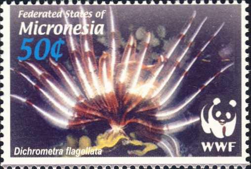 Dichrometra flagellata