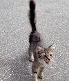 Raquítica gatita callejera se acerca a una paseadora de perros y le suplica irse a casa con ella