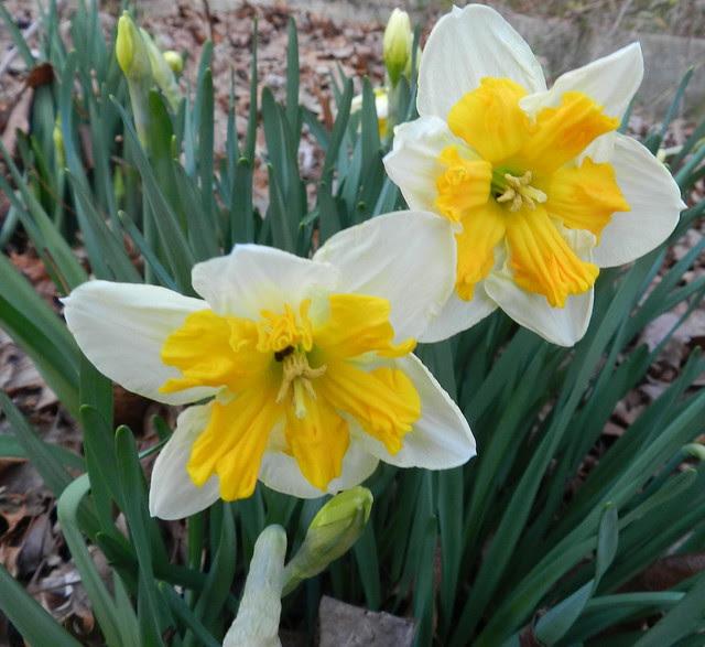 today's flowers DSCN8041