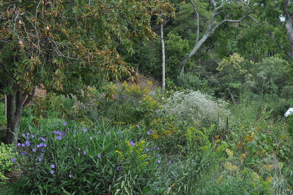 Upland Wetlands 2