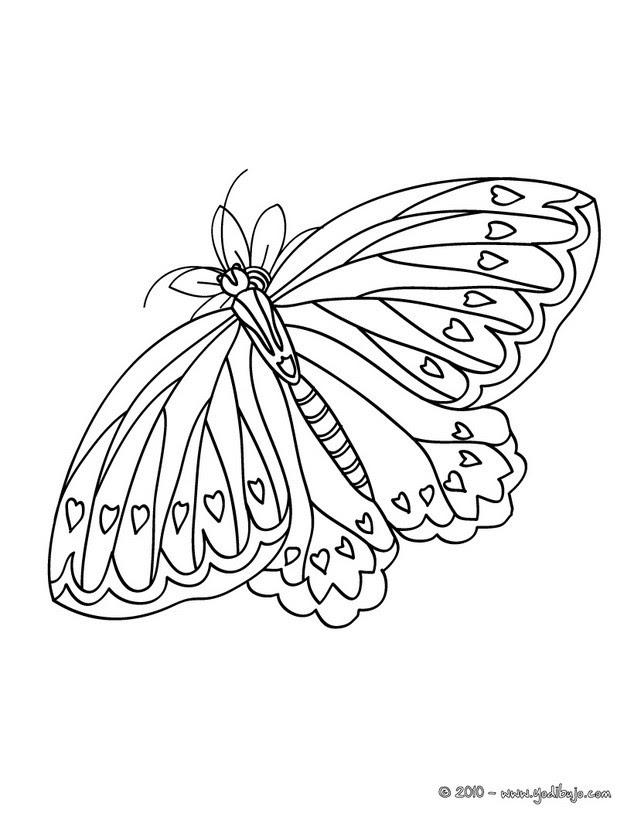 Dibujos Para Colorear Mariposa Monarca Eshellokidscom