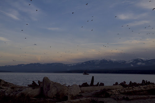 herring boat at sunset