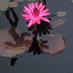 2009-08-19-IMG_4051