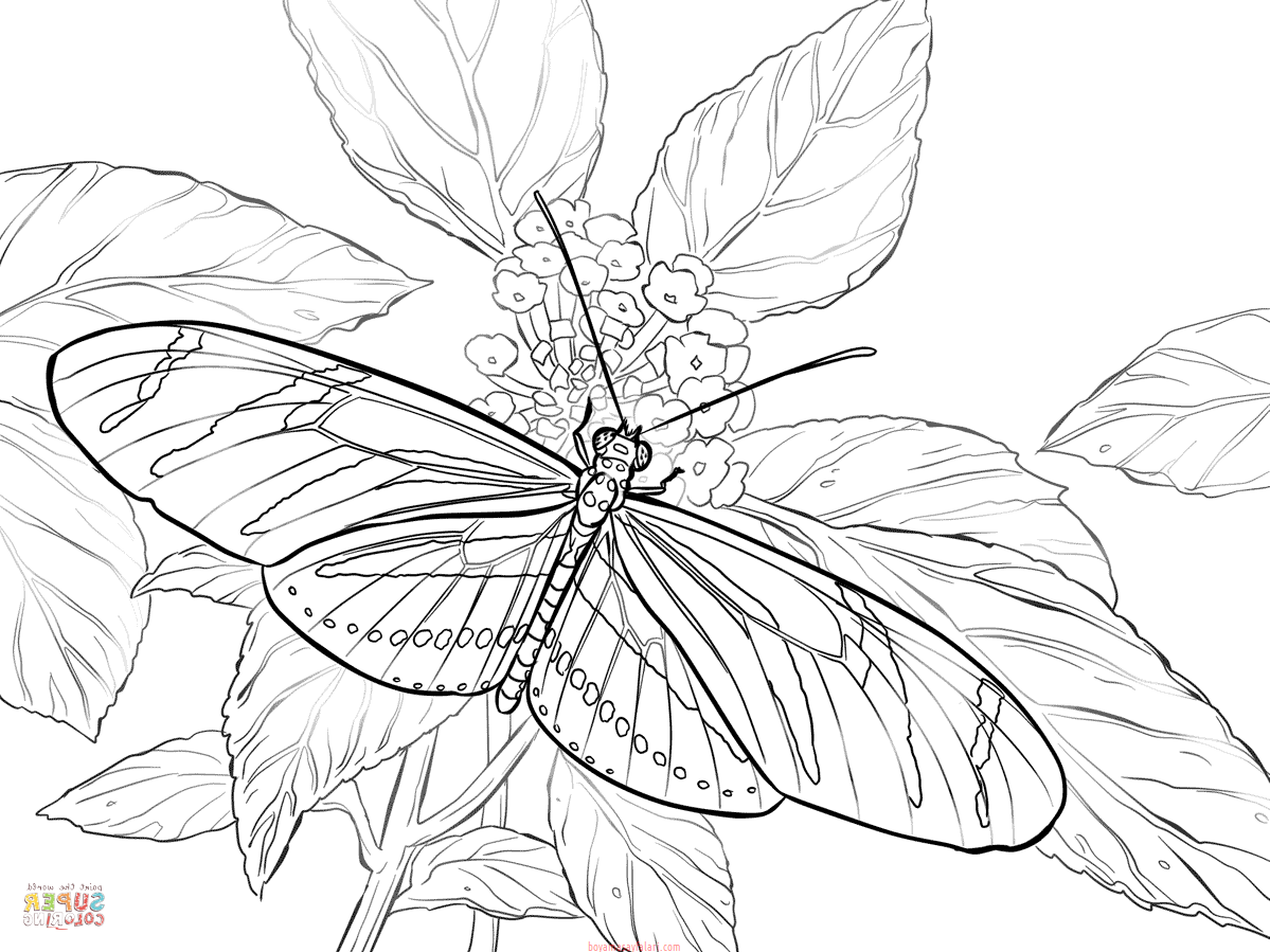 Kelebek Boyama Sayfaları Kelebek şablonları Sınıf öğretmenleri