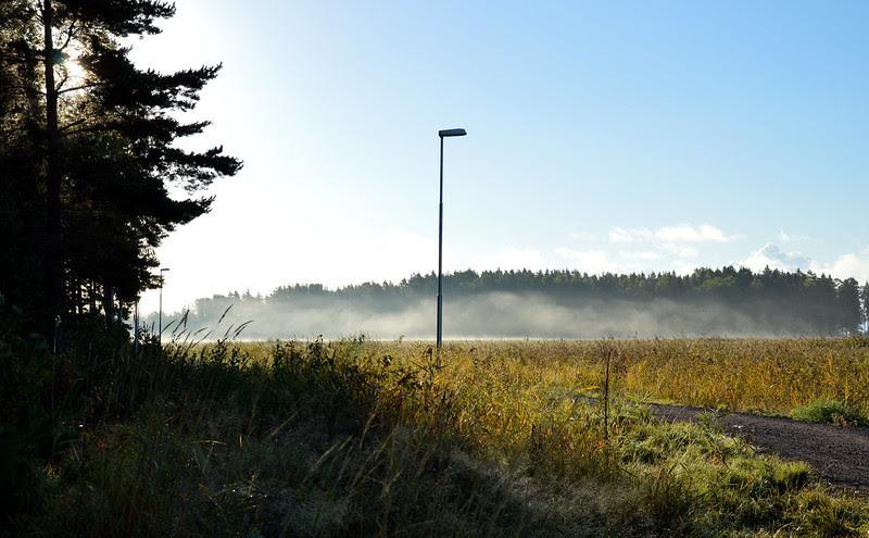 20 dimma skog