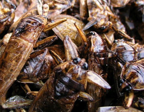 Cockroach infestation is a common household problem