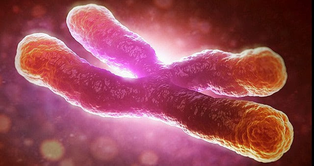 Telomere Cancer