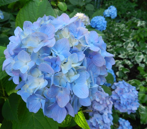 todayflowersDSCN8279