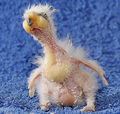 ugliest_birdc
