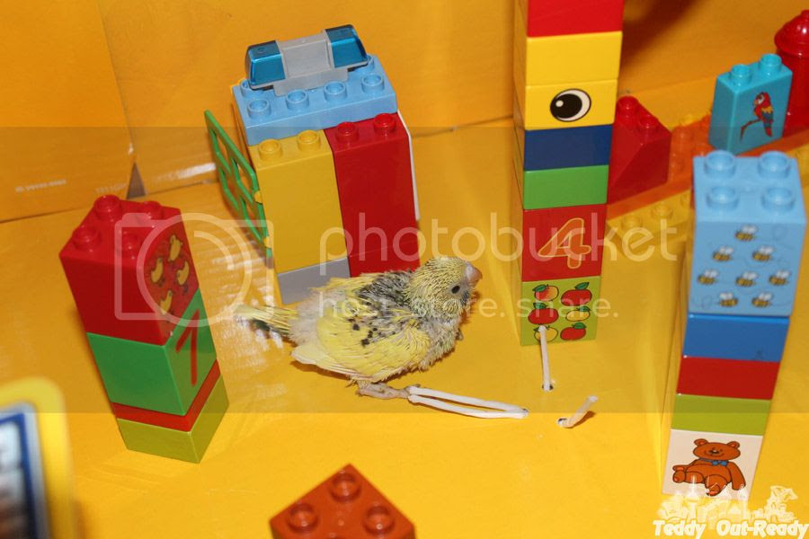 Lego City for budgie