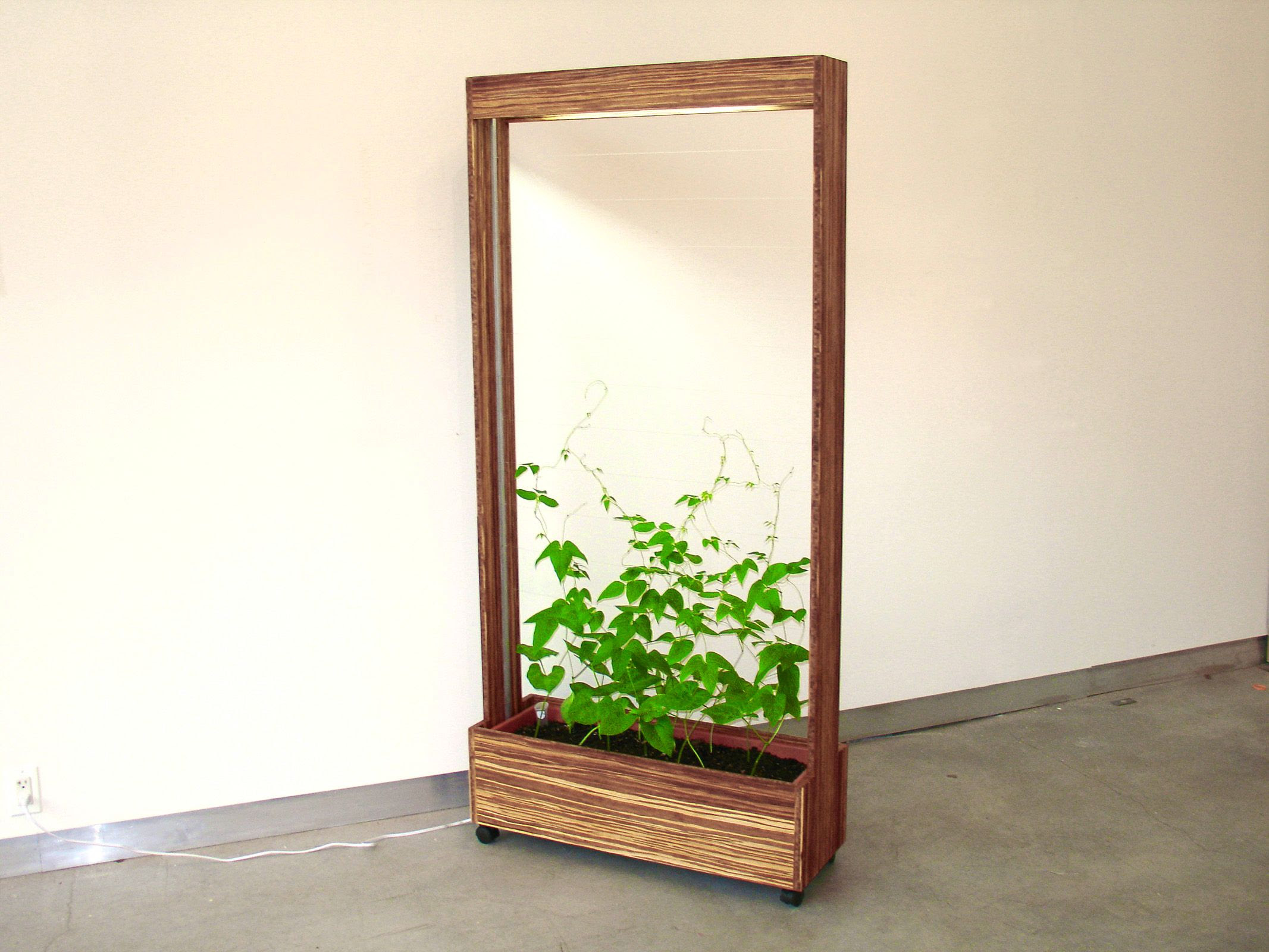 Vegetable Gardening | Real guide bring you the best indoor ...