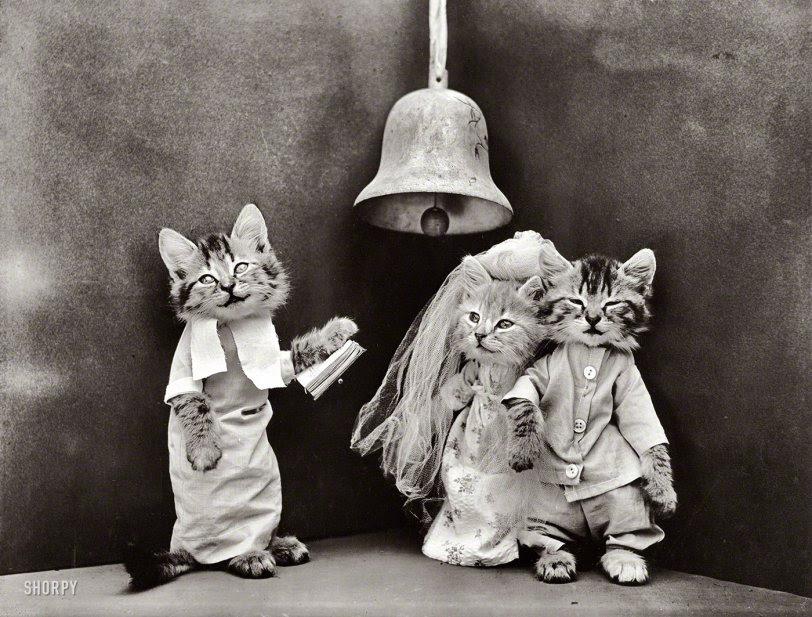 Cat Wedding: 1914