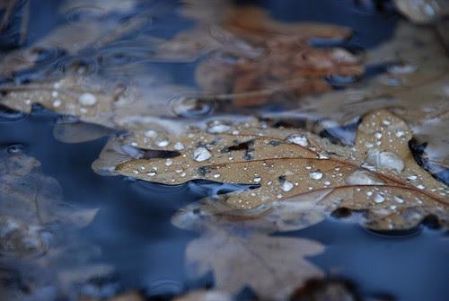 Autumn drops
